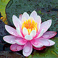 Water Lily   by Richard Copeland