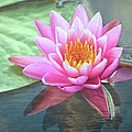 Water Lily by Sandi OReilly