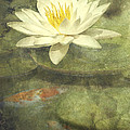 Water Lily by Scott Norris