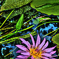 Water Lily by Shannon Scott
