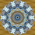 Water Patterns Kaleidoscope by Natalie Rotman Cote