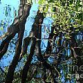 Water Reflections 3 by Nancy Mueller