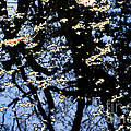 Water Reflections by Nancy Mueller