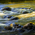 Beautiful Water Reflections On The Flowing Thornapple River by Randall Nyhof
