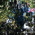Water Reflections 8 by Nancy Mueller