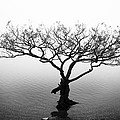 Water Tree by Les McLuckie