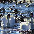 Water Wildlife by Sue Harper