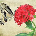 Watercolor Butterfly by Rosalie Scanlon