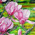 Watercolor Exercise Magnolias by Xavier Francois