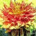 Watercolor Of Dreamy Dahlia by Elizabeth Dow
