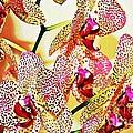 Watercolor Orchid Shadows by Judy Palkimas