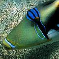 watercolored Huma by Tony and Kristi Middleton