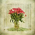 Watercolour Tulips by John Edwards