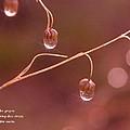 Waterdrop Haiku by Jeff Swan