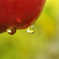Waterdrop Sliding Off An Apple  by Jeff Swan