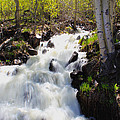 Waterfall By The Aspens by Shane Bechler
