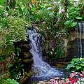 Waterfall Garden by Denise Mazzocco