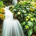 Waterfall In The Hosta by Eti Reid