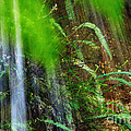 Waterfall Over Ferns by Kaye Menner