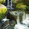 Waterfall Stream by Ron Dahlquist - Printscapes