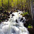 Waterfall Through The Aspens by Shane Bechler