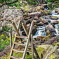 Waterfall Way by Adrian Evans