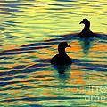 Waterfowl by Novastock