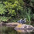 Waterfowl Pond by Kate Brown