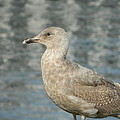 Waterfront Seagull  by Nicki Bennett