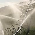 Watering Fields by LucendaLynn K