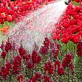 Watering The Garden by Anthony Totah