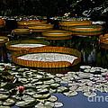 Waterlilies All by Byron Varvarigos