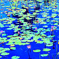 Waterlilies by Dominic Piperata