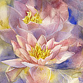 Waterlilies In Watercolor by Alfred Ng