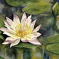 Waterlily by Alfred Ng
