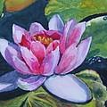 Waterlily by Vicki Brevell