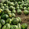 Watermelon Man Watermelon Stand by William Fields