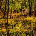 Watery Ramble by Kimberleigh Ladd
