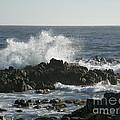 Wave Action by Bev Conover