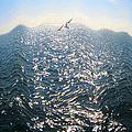 Wave by Ben and Raisa Gertsberg