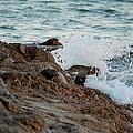 Waves Hitting The Rocks by Cynthia Guinn
