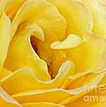 Waves Of Yellow by Sabrina L Ryan