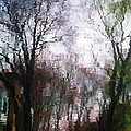 Wavy Willows by RC DeWinter