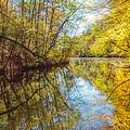 Waxen Autumn 2  by Susan McMenamin