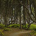 We Follow The Path II by Jon Glaser