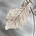 Weathered Remnant Of Summer by Beth Sawickie