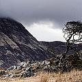 Weathered Tree by Tomas Urban