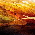 Weathered Wood Landscape by Hakon Soreide