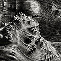 Weathered Wood by Robert Woodward