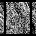 Weathered Wood Triptych Bw by Mike Nellums